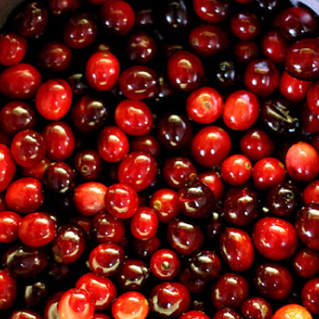 Ben Lear, Cranberry Plant - 1 Plant image number null