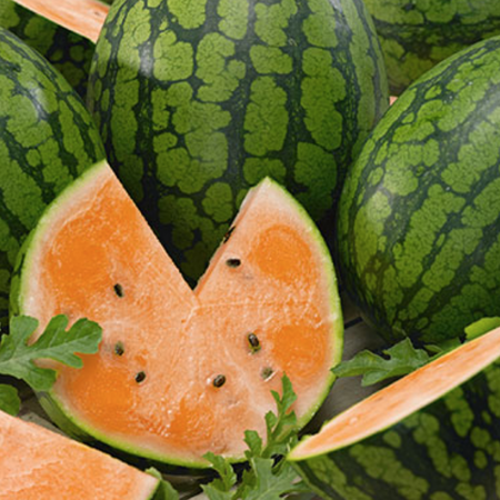 Tendersweet Orange, Watermelon Seeds - Packet image number null