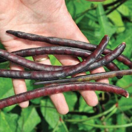 Pinkeye Purple Hull, Cowpea Seeds image number null