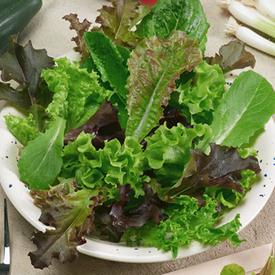 Spicy Salad Blend, Lettuce Seeds