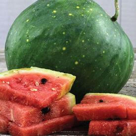 Moon and Stars, Watermelon Seeds