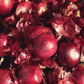 Red Karmen, Onion Sets