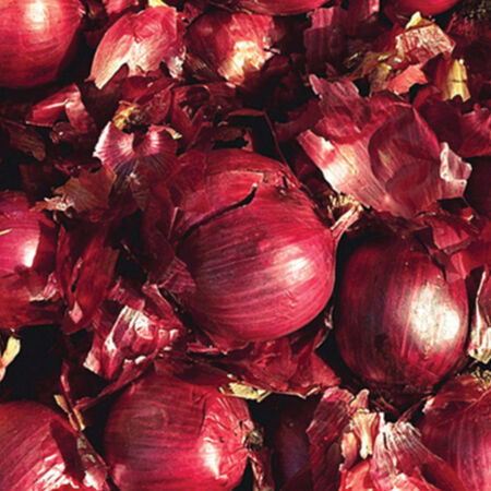 Red Karmen, Onion Sets - 1 Pound image number null