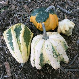 Ten Commandments, Gourd Seeds