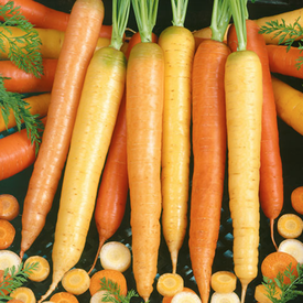 Culinary Blend, Carrot Seeds