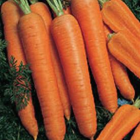 Napoli, Organic (F1) Carrot Seeds