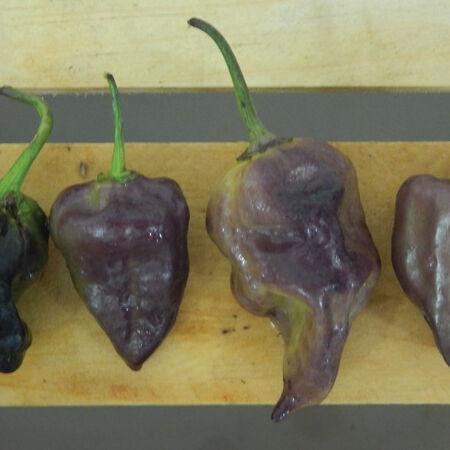 Purple Bhut Jolokia, Pepper Seeds - Packet image number null