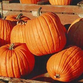 Halloween, Pumpkin Seeds
