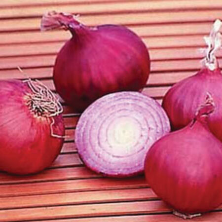Red Creole, Onion Seeds - Packet image number null