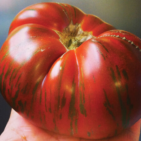 Chocolate Stripes, Tomato Seeds - Packet image number null
