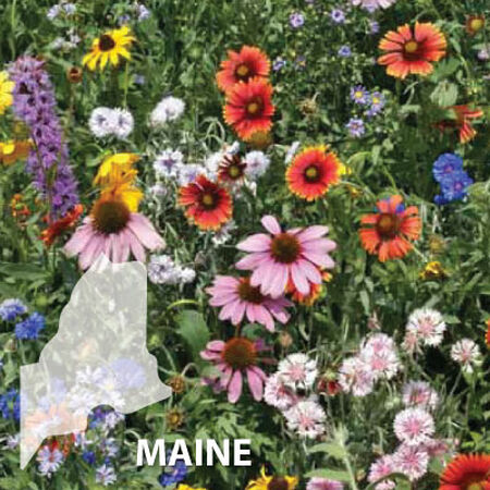 Maine Blend, Wildflower Seed - 1 Ounce image number null