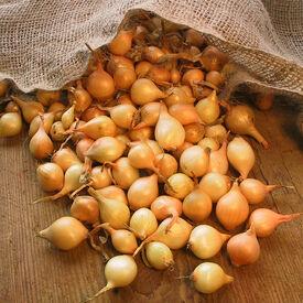 Sweet Oversize, Onion Sets