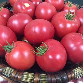 Mountain Rouge, Tomato Seeds