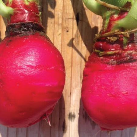 Early Scarlet Globe, Radish Seeds - Packet image number null