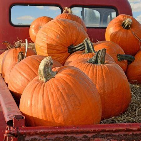 Big Max, Pumpkin Seeds - Packet image number null