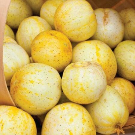 Lemon, Cucumber Seeds image number null
