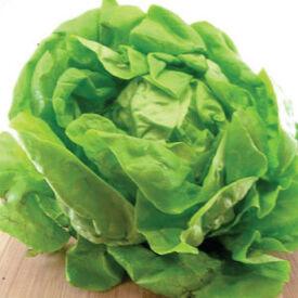 Bibb, Lettuce Seeds