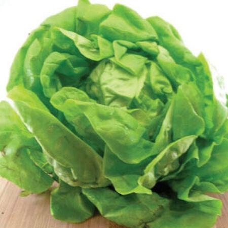 Bibb, Lettuce Seeds - Packet image number null