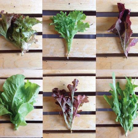 Gourmet Mesclun Blend, Lettuce Seeds - Packet image number null