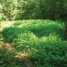 Deer Attractant Food Plot, Blends