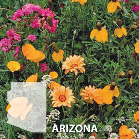 Arizona Blend, Wildflower Seed - 1 Ounce image number null