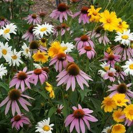 Shade Flower Blend, Wildflower Seed