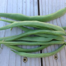 Greencrop, Bean Seeds