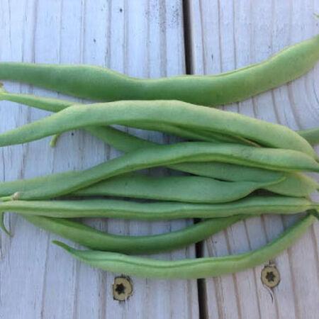 Greencrop, Bean Seeds - Packet (1 oz.) image number null