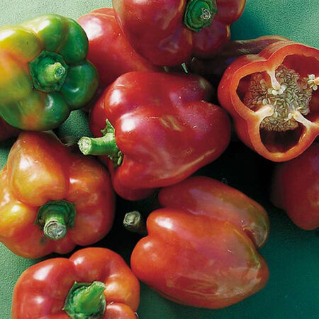 Bullnose, Pepper Seeds image number null
