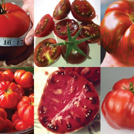 Heirloom Collection, Tomato Seeds - Collection image number null