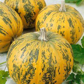 Pepitas, (F1) Pumpkin Seeds