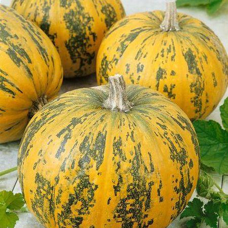 Pepitas F1, Pumpkin Seeds - Packet image number null