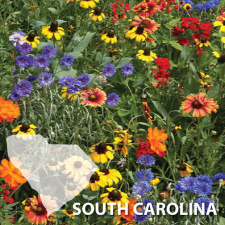 South Carolina Blend, Wildflower Seed - 1 Ounce image number null
