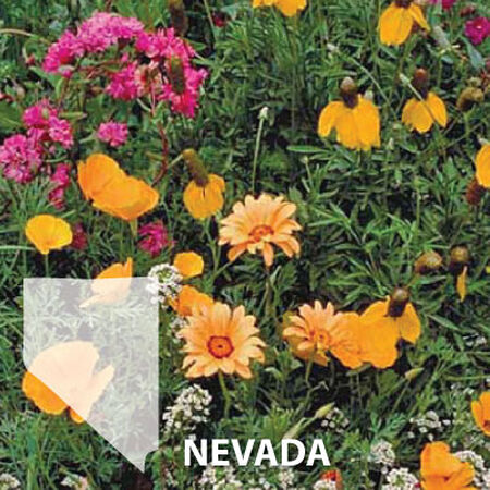 Nevada Blend, Wildflower Seed - 1 Ounce image number null