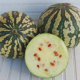 Citron Red Seeded, Watermelon Seeds