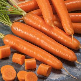 Bambino, Carrot Seeds