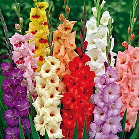 Color Mix, Edible Flowers image number null