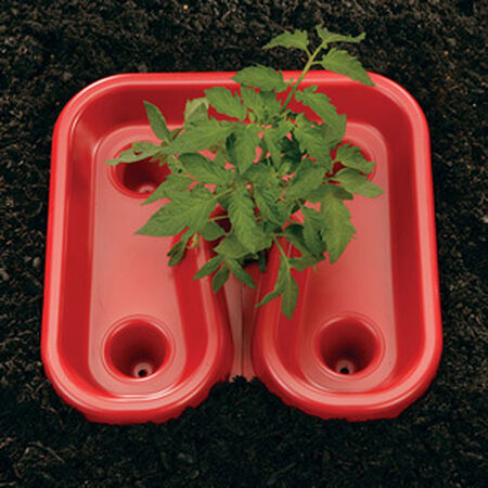 Red Tomato Trays,  Tomato Helpers - 12 Tomato Trays image number null