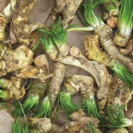 Roots, Horseradish