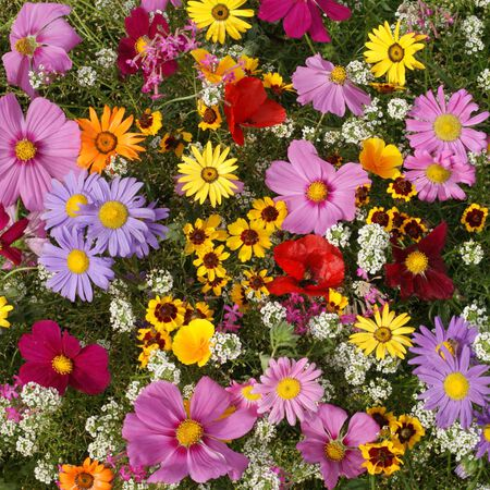 Annuals for Sun, Wildflower Seed - 1 Ounce image number null