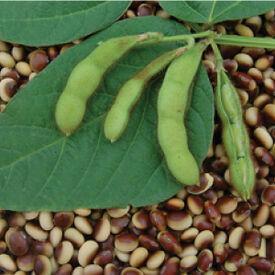 Agate, Bean Seeds