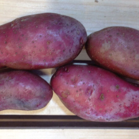 French Fingerling, Seed Potatoes - 2 Pounds image number null