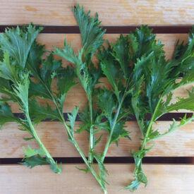 Mizuna Green Mustard Seed, Greens
