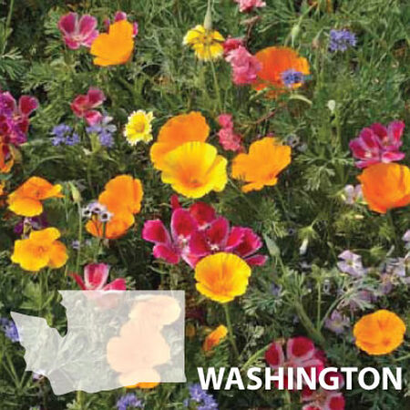 Washington Blend, Wildflower Seed - 1 Ounce image number null