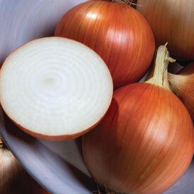 Oracle, (F1) Onion Seeds
