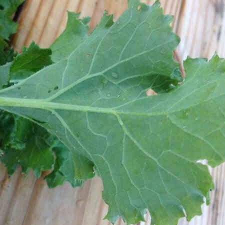 Premier, Kale Seed - Packet image number null