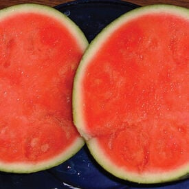 Round Trip Seedless, (F1) Watermelon Seeds