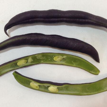 Royal Burgundy, Bean Seeds - Packet (1 oz.) image number null