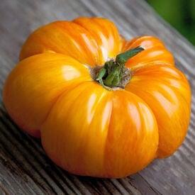 Copia, Tomato Seeds
