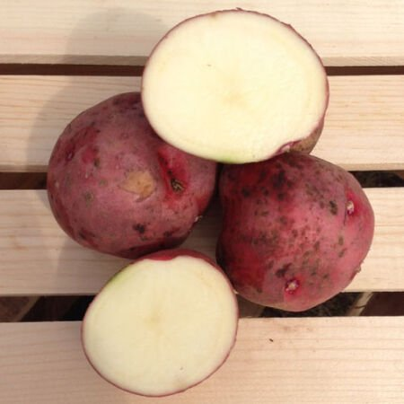 Red Pontiac, Seed Potatoes - 2 Pounds image number null